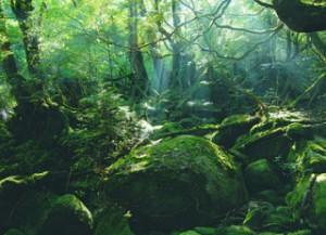 屋久島写真1